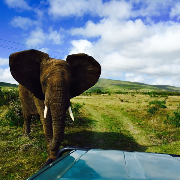 Garden Route Game Lodge Kaapstad Safari
